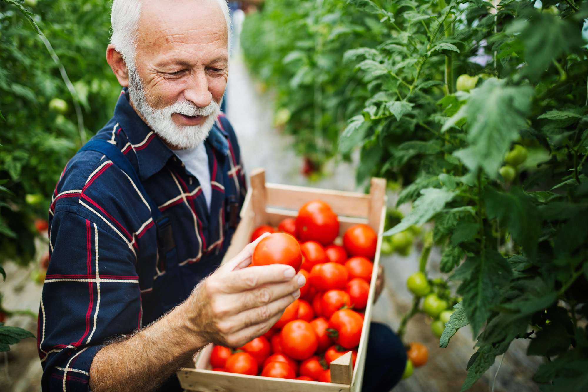 Top 4 Nutrition Resources for Seniors in Arkansas
